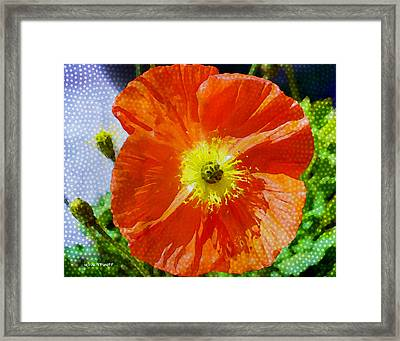 Poppy Series - Opened To The Sun Framed Print by Moon Stumpp