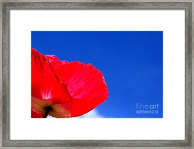 Poppy Sky Framed Print by Baggieoldboy