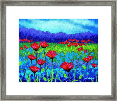 Poppy Study Framed Print by John  Nolan