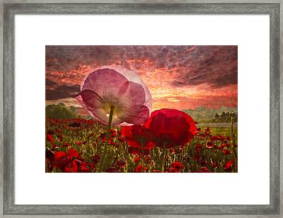 Poppy Sunrise Framed Print by Debra and Dave Vanderlaan
