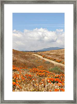 Poppy Trail Framed Print by Art Block Collections