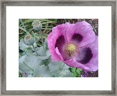 Poppy  Framed Print by Veronica Rickard