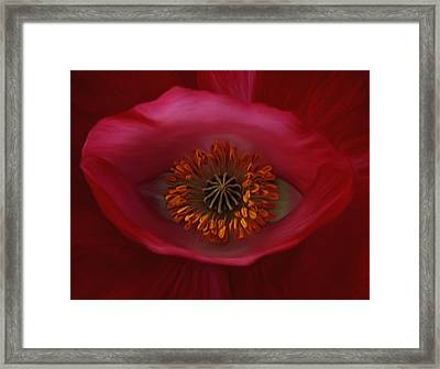 Poppy's Eye Framed Print by Barbara St Jean