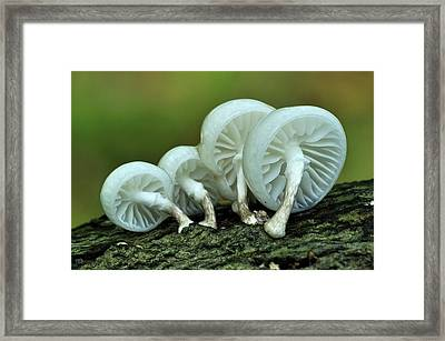Porcelain Fungus Framed Print