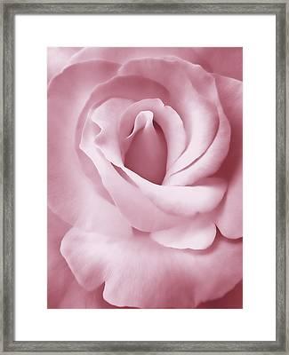 Porcelain Pink Rose Flower Framed Print by Jennie Marie Schell
