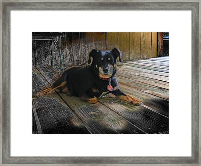 Porch Patrol Framed Print