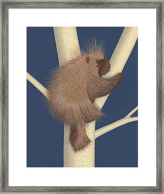 Porcupine Framed Print by Nathan Marcy
