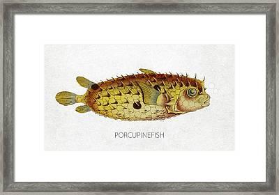 Porcupinefish Framed Print