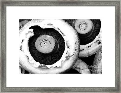 Portabellini Framed Print by Anne Gilbert
