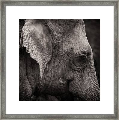 Portrait In Leather Framed Print