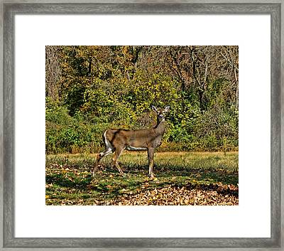 Portrait In The Wild Framed Print by Lanis Rossi