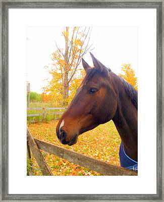 Portrait Of A Beauty Framed Print