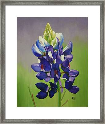 Portrait Of A Bluebonnet Framed Print