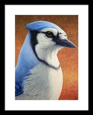 Bluejay Framed Prints