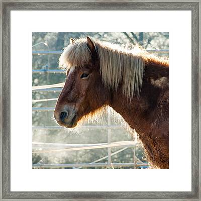 Portrait Of A Brown Horse Framed Print by Matthias Hauser