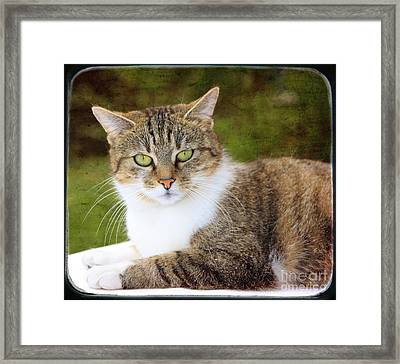 Portrait Of A Cat Framed Print by Angela Bruno