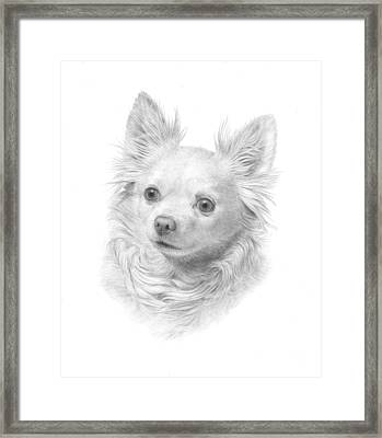 Portrait Of A Chihuahua Framed Print by Diane Cardaci