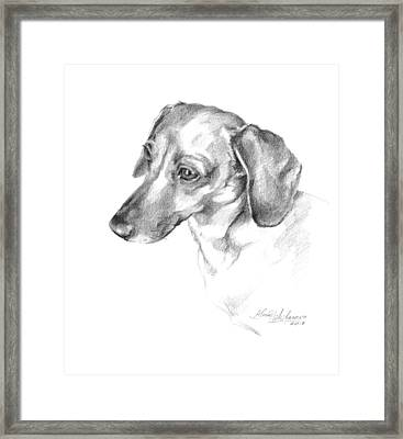 Portrait Of A Dachshund Paying Attention Framed Print