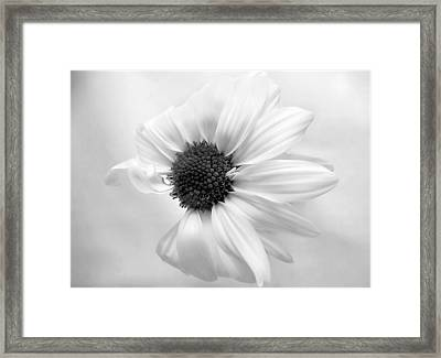 Framed Print featuring the photograph Portrait Of A Daisy by Louise Kumpf