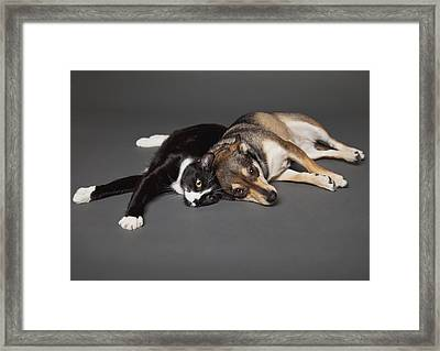 Portrait Of A Dog And Cat Laying Framed Print