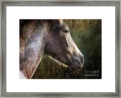 Portrait Of A Dreaming Horse Framed Print by Angel Ciesniarska