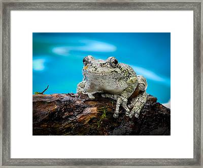 Portrait Of A Frog Framed Print