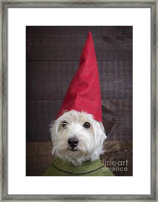 Portrait Of A Garden Gnome Framed Print by Edward Fielding