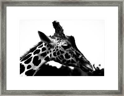 Portrait Of A Giraffe Framed Print