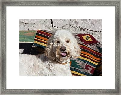 Portrait Of A Goldendoodle Lying Framed Print