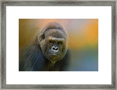 Portrait Of A Gorilla Framed Print