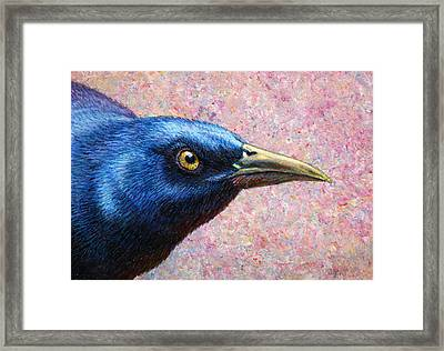 Portrait Of A Grackle Framed Print by James W Johnson