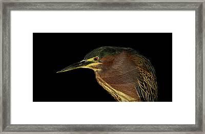 Portrait Of A Green Heron Framed Print