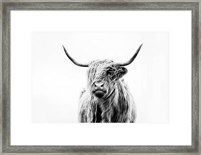 Portrait Of A Highland Cow Framed Print by Dorit Fuhg