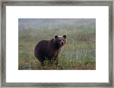 Portrait Of A Juvenile European Brown Framed Print by Sergio Pitamitz