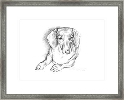 Portrait Of A Laying Dachshund Framed Print