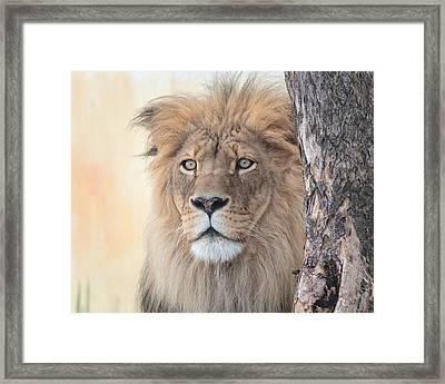 Portrait Of A Lion Framed Print by Everet Regal