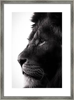 Portrait Of A Lion Framed Print by Martin Newman