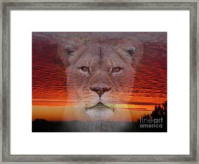 Portrait Of A Lioness At The End Of A Day Framed Print by Jim Fitzpatrick