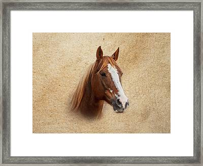 Portrait Of A Mare Print Framed Print