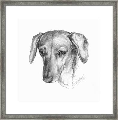 Portrait Of A Mini Dachshund  Framed Print