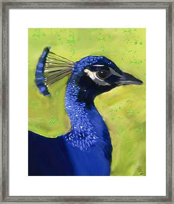 Portrait Of A Peacock Framed Print