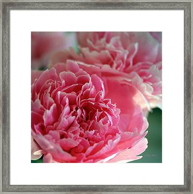 Portrait Of A Peony Framed Print
