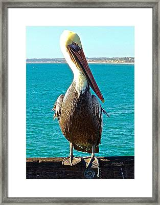 Portrait Of A Perky Pelican Framed Print by Brian D Meredith