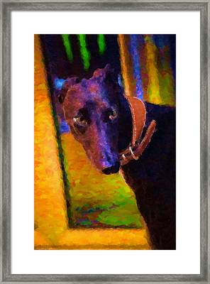 Portrait Of A Portuguese Dog 2 Framed Print by Mary Machare