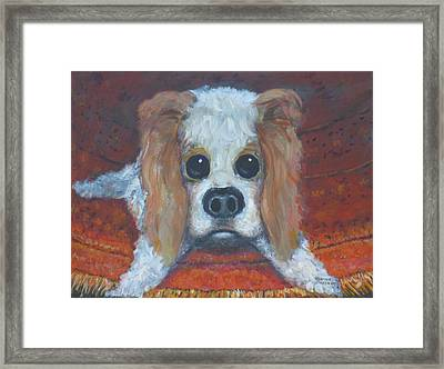 Portrait Of A Puppy Framed Print