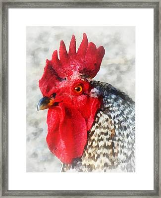 Portrait Of A Rooster Framed Print by Susan Savad