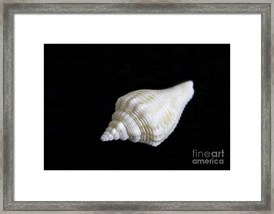 Portrait Of A Sea Shell Framed Print by Arlene Carmel