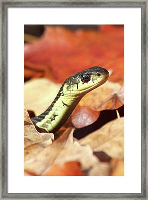 Framed Print featuring the photograph Portrait Of A Snake by Doris Potter