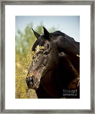 Portrait Of A Thoroughbred Framed Print