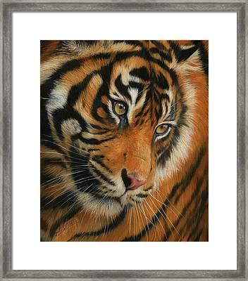 Portrait Of A Tiger Framed Print by David Stribbling
